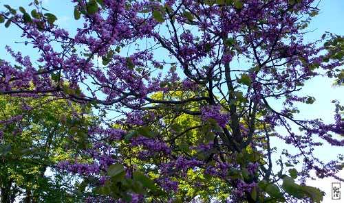 Blooming Tree Arbre En Fleurs Sophie S Maze