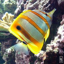 fish tropical poisson - photo #14