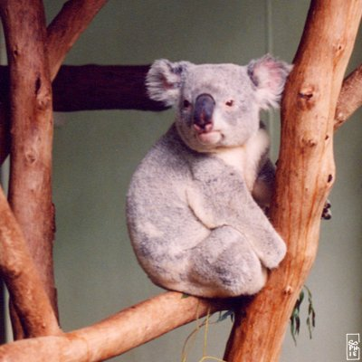 [Toyota] Mark X ZiO Koala
